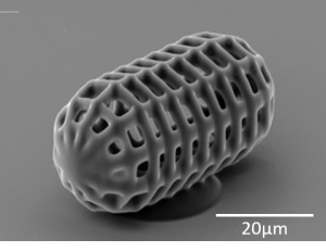 A printed cell