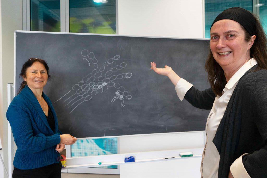 Prize-winning ERC grantees Anna Akhmanova and Marileen Dogterom